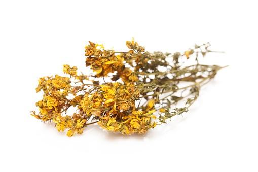 Šentjanževka cvet