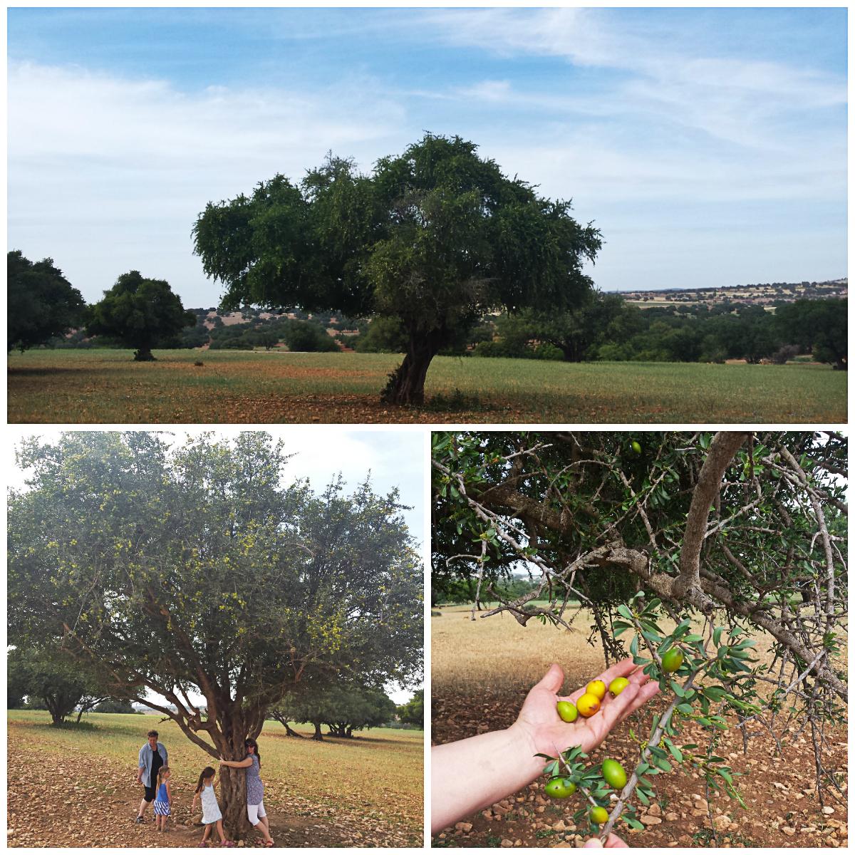 Naravna darila EMMA v nasadu arganovih dreves